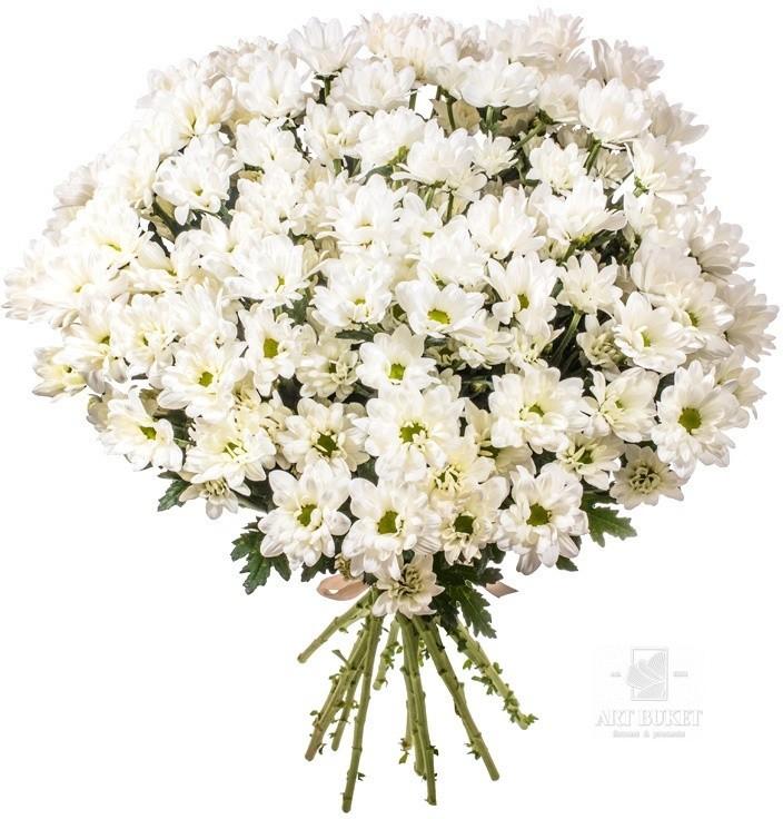Сенполия, цветы волгоград оптом цены