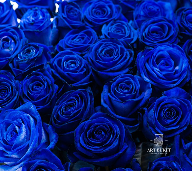 Купить розы синие